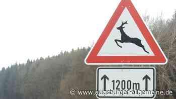 Autofahrer geraten bei Weilheim in eine Rotte Wildschweine