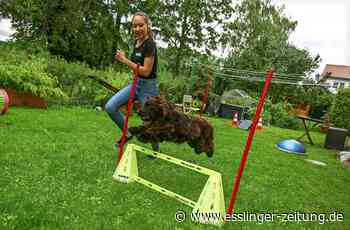 Hunde-Hindernislauf im Fernsehen - Esslingerin bei RTL-Show Top Dog - esslinger-zeitung.de