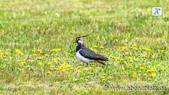 Wie erfolgreich war das Vogeljahr in Geesthacht? - Hamburger Abendblatt