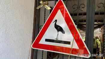 Verstöße gegen Tierschutzgesetz? Streit um die Vogelauffangstation Fingermann in Rastatt - SWR