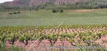 La Rioja recibirá cinco millones de euros del PASVE el próximo año - Lo Mejor del Vino de Rioja La Rioja