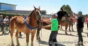 De nombreux spectateurs au concours de chevaux de trait à Landivisiau - Le Télégramme