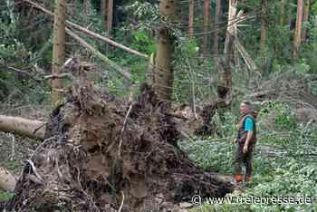 Nach Sturm in Hohenstein-Ernstthal: Wälder verwüstet, Förster besorgt - Freie Presse