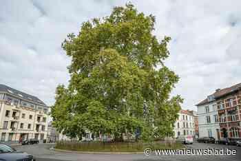 Locaties gezocht: waar kan je een monumentale boom aanplanten in Gent? - Het Nieuwsblad