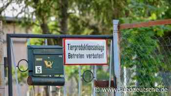 Schweinepest: Detektivarbeit bei Suche nach Übertragung - Süddeutsche Zeitung