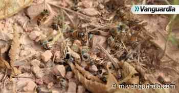 Unen esfuerzos en el Socorro para la protección de la apicultura - Vanguardia
