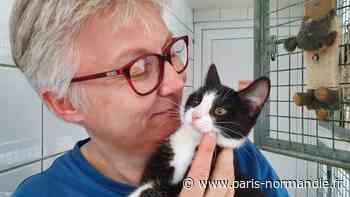 VIDÉO. À Rouen, les abandons d'animaux n'augmentent pas en cet été 2021 - Paris-Normandie