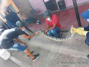 En el colegio San Gerardo María Mayela (Norcasia) la clase es para aprender de serpientes - La Patria.com