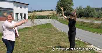 Trittsteinflächen für die Insekten - Region Kelheim - Nachrichten - Mittelbayerische