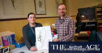 Floral 'time capsules': Herbarium logs its elusive millionth specimen