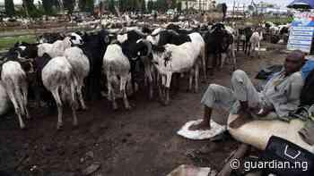 Yobe to generate N1b IGR from livestock tax - Guardian
