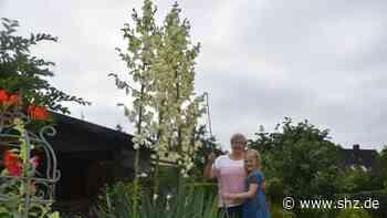Uetersen: Marla liebt die imposante Palmlilie im Garten der Großeltern | shz.de - shz.de
