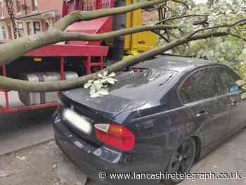 VIDEO: Skip truck clips tree causing branch to fall on to BMW