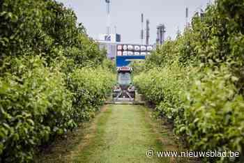 """Onrust bij boeren in Zwijndrecht: """"Als ze morgen iets vinden in mijn fruit, is het gedaan met mijn bedrijf doo - Het Nieuwsblad"""