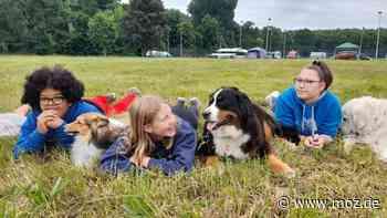 Camping und Tiere: Schnuppercamp für Kinder und Hunde im Volksparkstadion in Neuruppin - moz.de