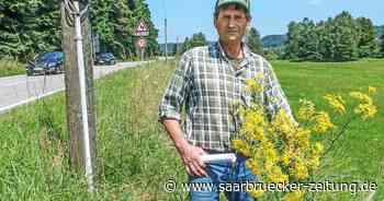 Jakobskreuzkraut in der Region Homburg ein großes Problem - Saarbrücker Zeitung