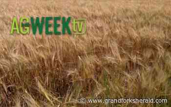 Anheuser-Busch grower days talks new varieties and genetics - Grand Forks Herald