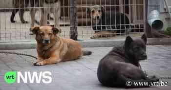 Boutersem weigert vergunning te geven aan nieuw dierenasiel - VRT NWS