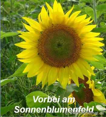 Vorbei bei den Sonnenanbetern ! - Lutherstadt Wittenberg - myheimat.de - myheimat.de