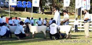 Las mejores ovejas regresan al aprisco, luego de dos años - Nacionales - ABC Color