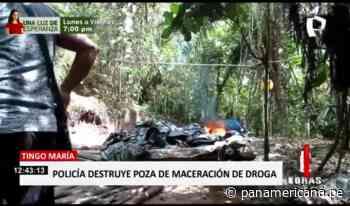 Tingo María: PNP destruye poza de maceración de droga - Panamericana Televisión