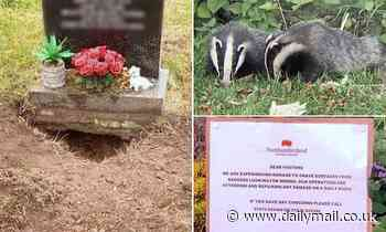 'Grave robbing' badger colony wreaks havoc digging up gravestones at cemetery