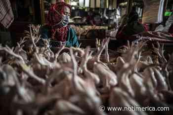 Coronavirus.- Indonesia extiende una semana más sus fuertes restricciones dado el alto número de contagios - www.notimerica.com