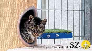 Katze Ritas Brustkorb ist eingedrückt – war es ein Tritt? - Salzgitter Zeitung