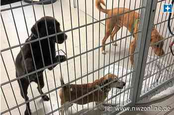 "Haustiere in Emden: Tierfreunde in Sorge um ""Corona-Abgaben"" - Nordwest-Zeitung"