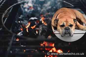 Vet's column on the danger of dogs eating barbecue food - Dorset Echo