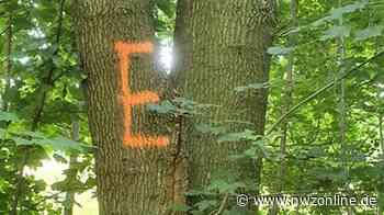 Schädlingsbekämpfung: Darum sind so viele Bäume in Osternburg mit einem E markiert - Nordwest-Zeitung