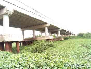 Environmental activist bemoans blockage of Epie Creek in Yenagoa by water hyacinth - Daily Post Nigeria