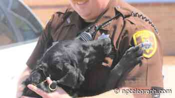 Doggone hardworking canines help Lincoln County Sheriff's Office sniff out drugs - North Platte Telegraph