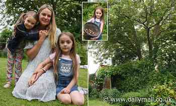 War of the walnut tree: Mother faces court if she trims branches in her garden