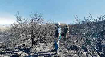 Arequipa: incendio forestal en Chiguata fue controlado, pero caso quedará impune - La República Perú