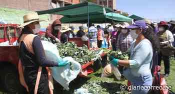 Precios de las verduras bajan en principales mercados de Arequipa - Diario Correo