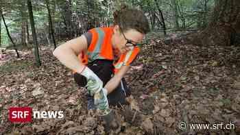 Archäologie in der Freizeit – Wie Freiwillige im Kampf gegen illegale Ausgräber helfen - Schweizer Radio und Fernsehen (SRF)