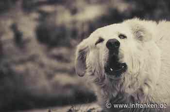 Burgebrach: Zwei Hunde attackieren Jogger – blutende Wunde - inFranken.de