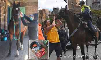 Coronavirus Australia: Brave police horse Tobruk receives gifts from the public after protests