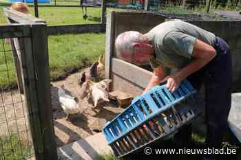 Geredde kippen terug in eigen hok aan Koekoeklaan - Het Nieuwsblad