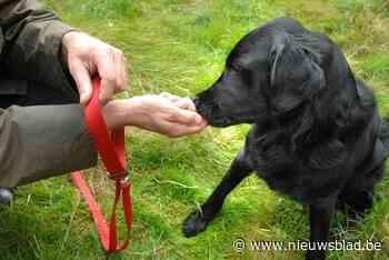 Nieuwe hondenweide naast mountainbiketerrein