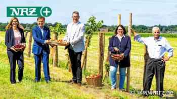 Hohe Mark Steig: RVR eröffnet in Wesel einen Nasch-Obst-Weg - NRZ