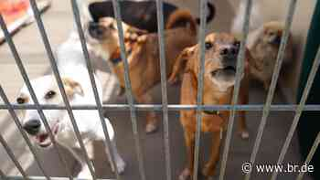 Corona: Tierheim weiß nicht wohin mit zurückgegebenen Tieren - BR24