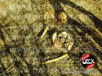 Polícia encontra ossada humana em Campos dos Goytacazes - Portalozk.com