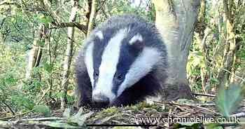 Families could camp out to protect graves from Berwick's badger problem