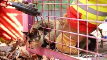 Tierischer Einsatz in Itzehoe: Feuerwehr rettet Katzenbaby aus misslicher Lage | shz.de - shz.de