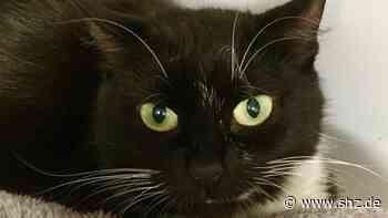 Tierschutzverein Itzehoe: Mysteriöse Gefahr für Katzen: Legt ein Tierhasser Gift in Hohenfelde? | shz.de - shz.de