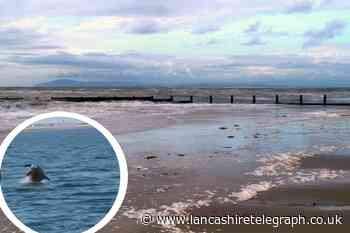Video shows dolphins diving in and out the sea at Fleetwood