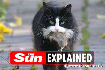 Why do cats bring you dead animals?... - The Sun