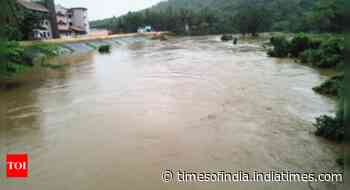 Goa: Livestock hit, animals drown, get washed away - Times of India